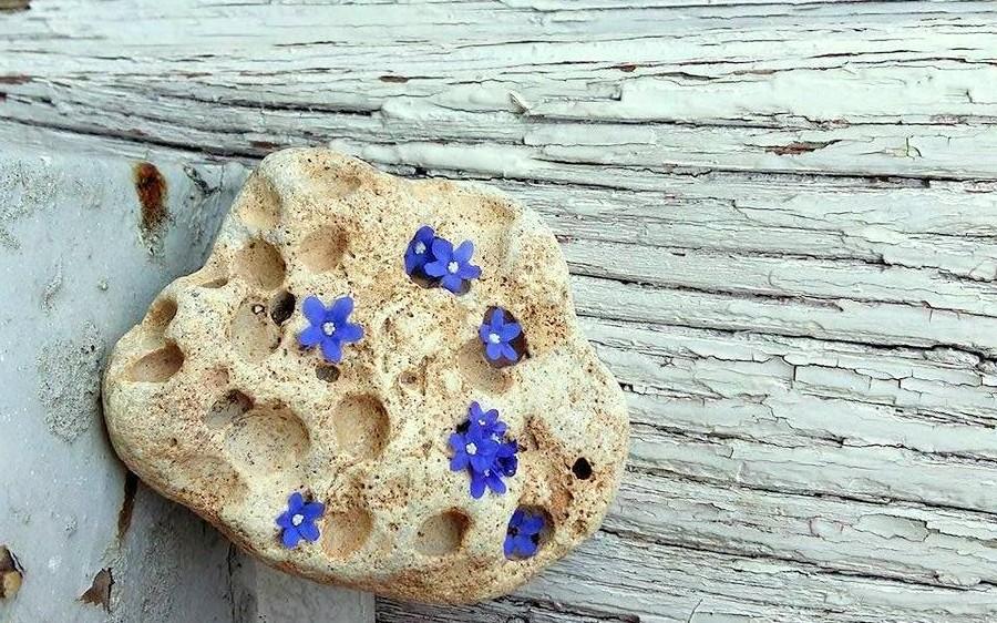 Piatra de râu pe care au fost așezate flori albastre