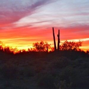 apus de soare în Arizona, cu cactuși la orizont