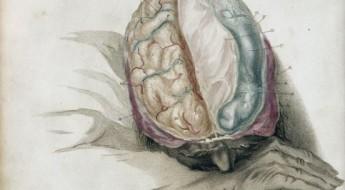 ilustrație a creierului uman dintr-un manual din anul 1802