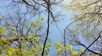 Cerul văzut printre ramurile copacilor