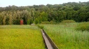 Drum ingust, de lemn, ce trece printr-un câmp verde cu stuf. Merge până departe, într-o pădure
