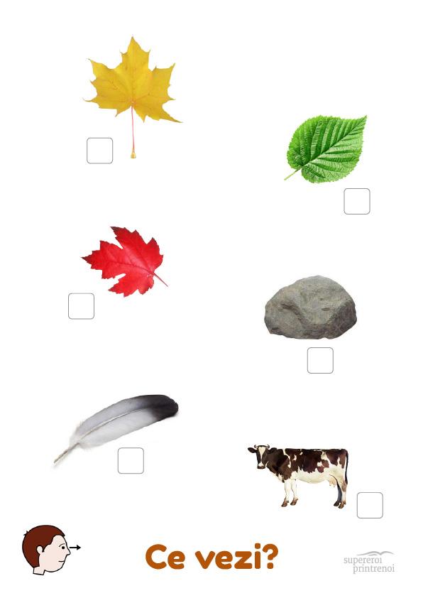 Fișe de lucru + activități cu frunze